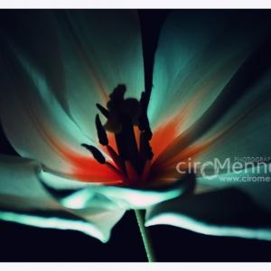 fiori-3