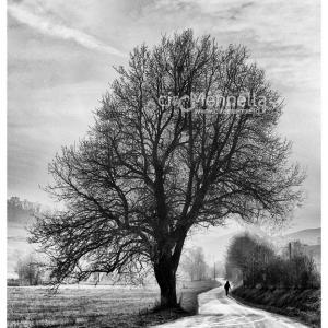 inverno-nelle-langhe