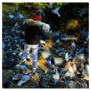 la-signora-dei-piccioni-3